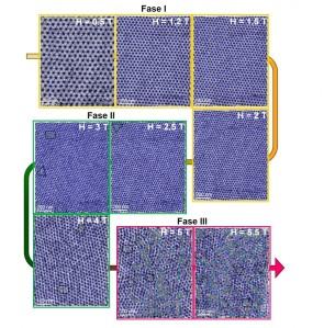 Transición orden-desorden de la red de vórtices 2D inducida por inconmensuración a una modulación 1D a 0.1 K. El desorden en la red aumenta de forma continua con el campo magnético, pasando de un sólido hexagonal sin defectos (fase I), a un sólido con orden orientacional pero con desorden posicional (fase II), y finalmente, a una red completamente desordenada (fase III). Isabel Guillamón. UAM.